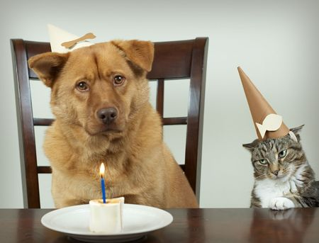 Dog and cat sitting at the table and celebrating Birthday anniversary. Focus on the jealous cat. photo