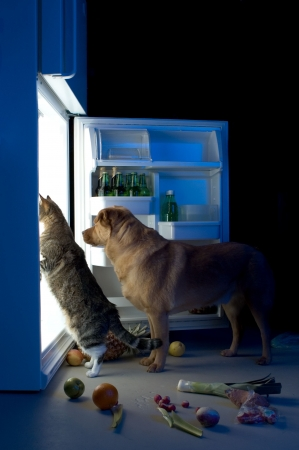 Cat and dog looking for meat in the refrigerator Stock Photo
