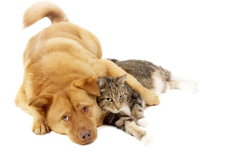 Dog and cat relaxing (white background) photo