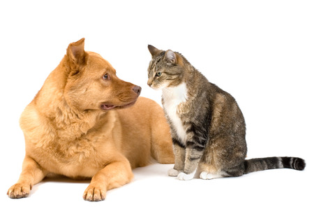 Dog leaning and cat sitting isolated on white background