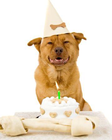 Dog Happy Birthday