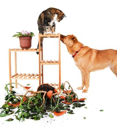 Dog and cat after breaking a ceramic pot with plant.