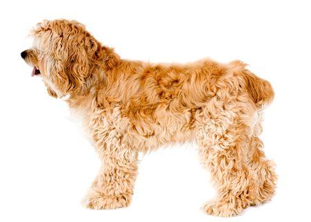 Hond profiel geïsoleerd op witte achtergrond