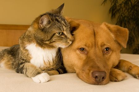 Cat and dog resting together on bed Stock Photo