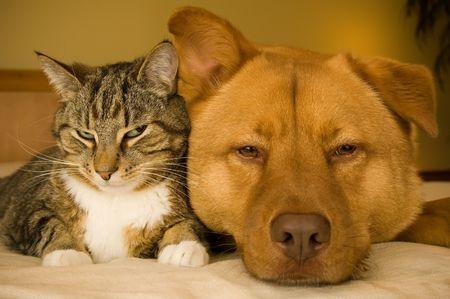 Cat and dog resting together on bed Standard-Bild