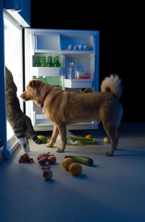 Cat and Dog searching for meat in the refrigerator Stockfoto