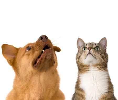 Dog and cat looking up. Add your text above. Stock Photo