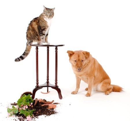 De chat et de chien de briser des objets, après une poursuite