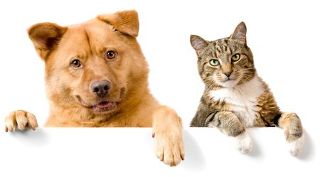 Dog and Cat above white banner looking at camera Stock Photo - 3361346