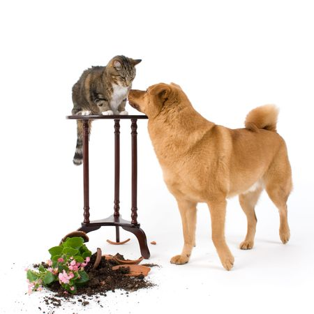 messy: Cat and dog breaking things after a chase