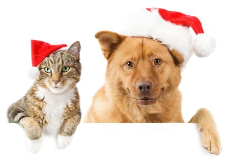 holiday lighting: Cat and Dog with red hats above white banner Stock Photo