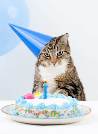 Cat Happy Birthday party