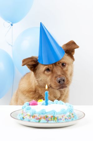 Dog Birthday party with cake and balloons Stock Photo