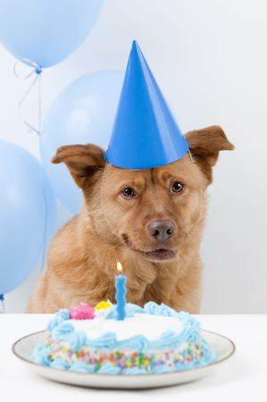 Dog Birthday party with cake and balloons