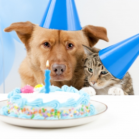 dog sitting: Dog and cat Birthday party with cake