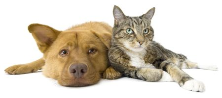 Dog and cat together on white background. Wide angle picture. Stockfoto