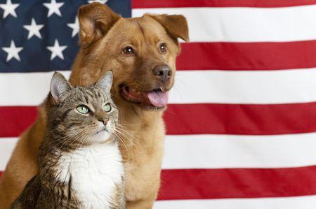 Proud American Haustiere mit US-Flagge als Hintergrund. Fokus auf Katze