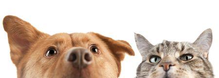 개와 고양이는 매우 위로 카메라에 닫습니다. 스톡 콘텐츠