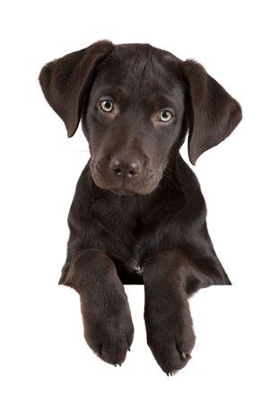 白い旗の上の子犬 写真素材 - 6754867
