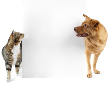 Cat and dog side to side and looking at banner Stock Photo