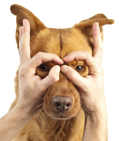 Dog looking through human fingers Stock Photo - 7898687