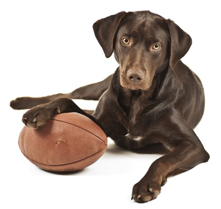 Dog resting his paw on American football. Photo isolated on white background.