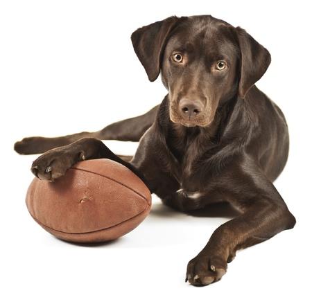 Hond zijn poot rustend op American football. Foto geïsoleerd op een witte achtergrond. Stockfoto
