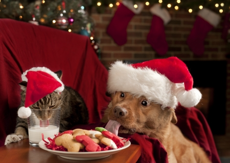 Cat and Dog eating and drinking Santas cookies and milk.