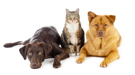 Cat and dogs together Stock Photo - 10043347