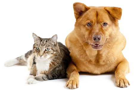 close together: Cat and dog on white background