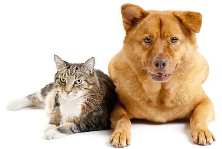 Katze und Hund auf weißem Hintergrund Lizenzfreie Bilder