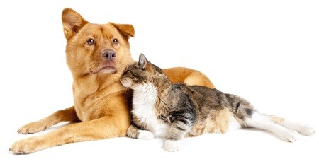 dog cat: Dog and cat leaning against each other