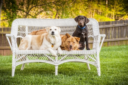 Dogs sitting outdoor and posing on wicker loveseat