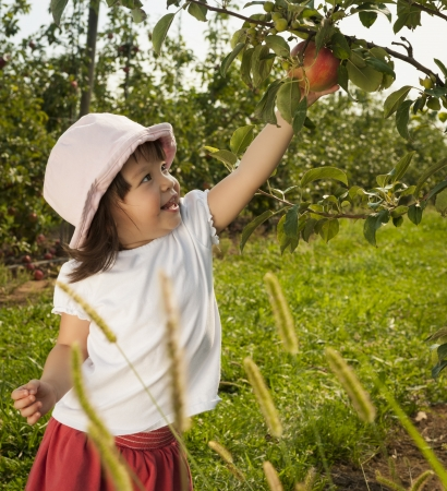 작은 여자 아이는 과수원에서 사과 따기