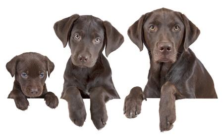 yaşları: Köpek Stok Fotoğraf