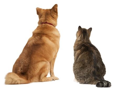 dogs sitting: Gato y perro mirando hacia arriba. A�ada su texto anterior. Foto de archivo
