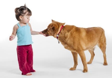 Young girl feeding treat to dog. Photo on white background Stock Photo - 16607622