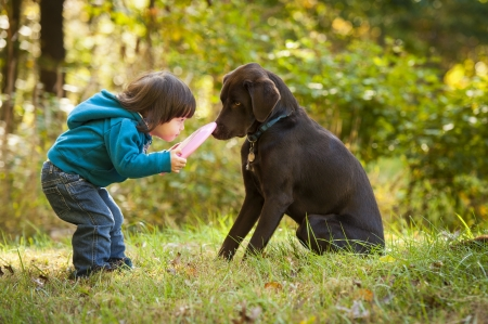 children playing outside: Young kid playing fetch game with dog and frisbee Stock Photo