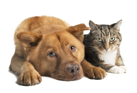 Dog and cat together on white background  Wide angle picture  Stockfoto