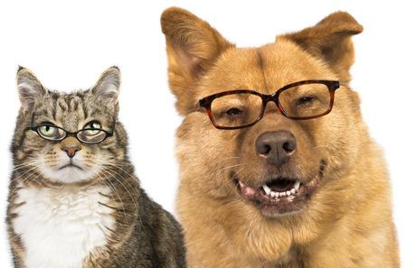 Hond en kat op een witte achtergrond dragen van een bril Stockfoto