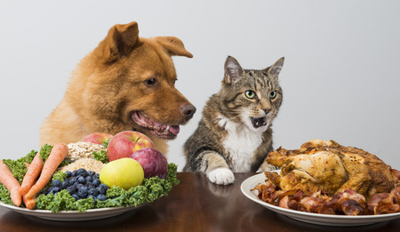 Dog and cat choosing meat versus veggies and fruits