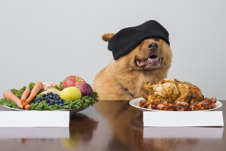 Juego de reto con los ojos vendados con el perro. Perro de elegir entre dos tipos de alimentos. Foto de archivo - 37230697