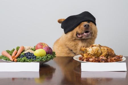 perro comiendo: Juego de reto con los ojos vendados con el perro. Perro de elegir entre dos tipos de alimentos.