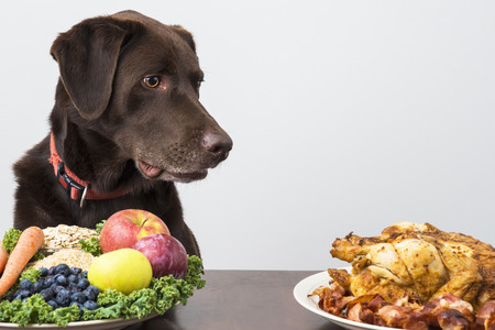 carne de pollo: Perro mirando a la comida la carne