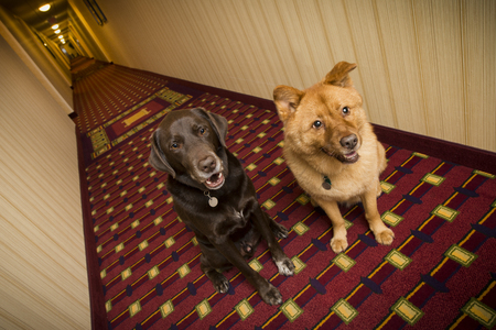 Dogs in pet friendly hotel Stock Photo - 54922349
