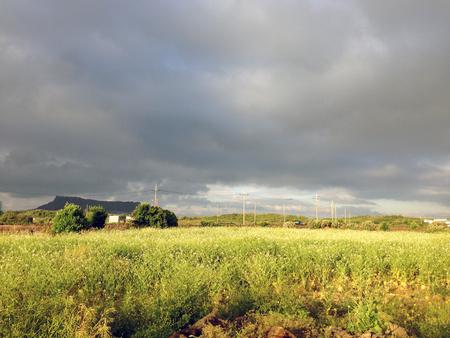 Beautiful field of Jeju Island