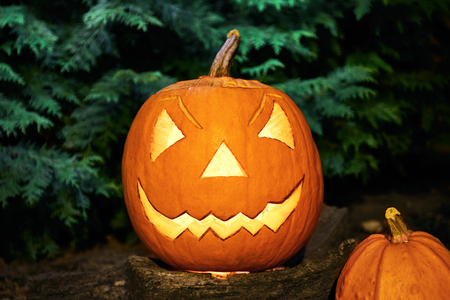 Two Halloween pumpkin on stump. Grunge background. Fir tree background.
