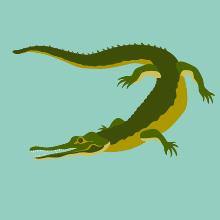 coldblooded: Crocodile isolated realistic vector illustration flat style