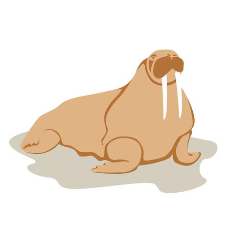 adult walrus vector illustration style Flat