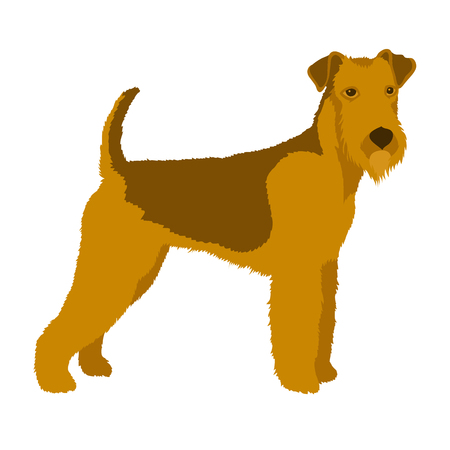 Airedale dog illustration style Flat profile Illustration